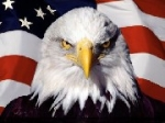 Serious Eagle
