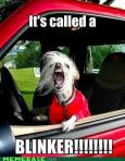 Dog It's called a blinker
