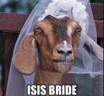 ISIS BRIDE - Camel in Wedding Veil