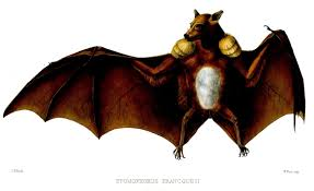 Bat - with boxing gloves - animal