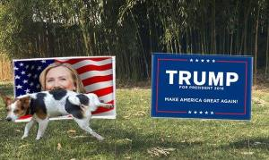 dog-peeing-on-hillary-yard-sign